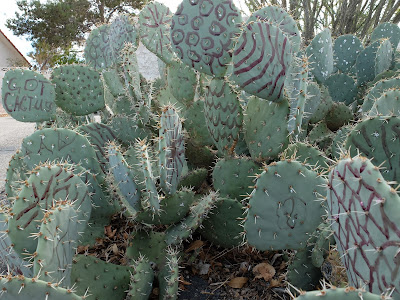 The Painted Cactus