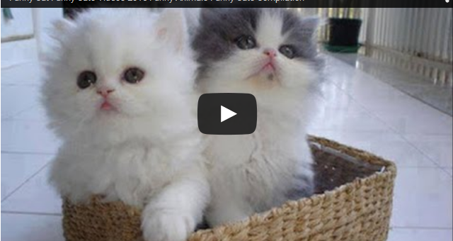funny cat videos - DriverLayer Search Engine Funny Cat Videos Episodes
