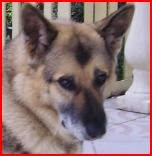 Mon chien Betty décédé en 2009