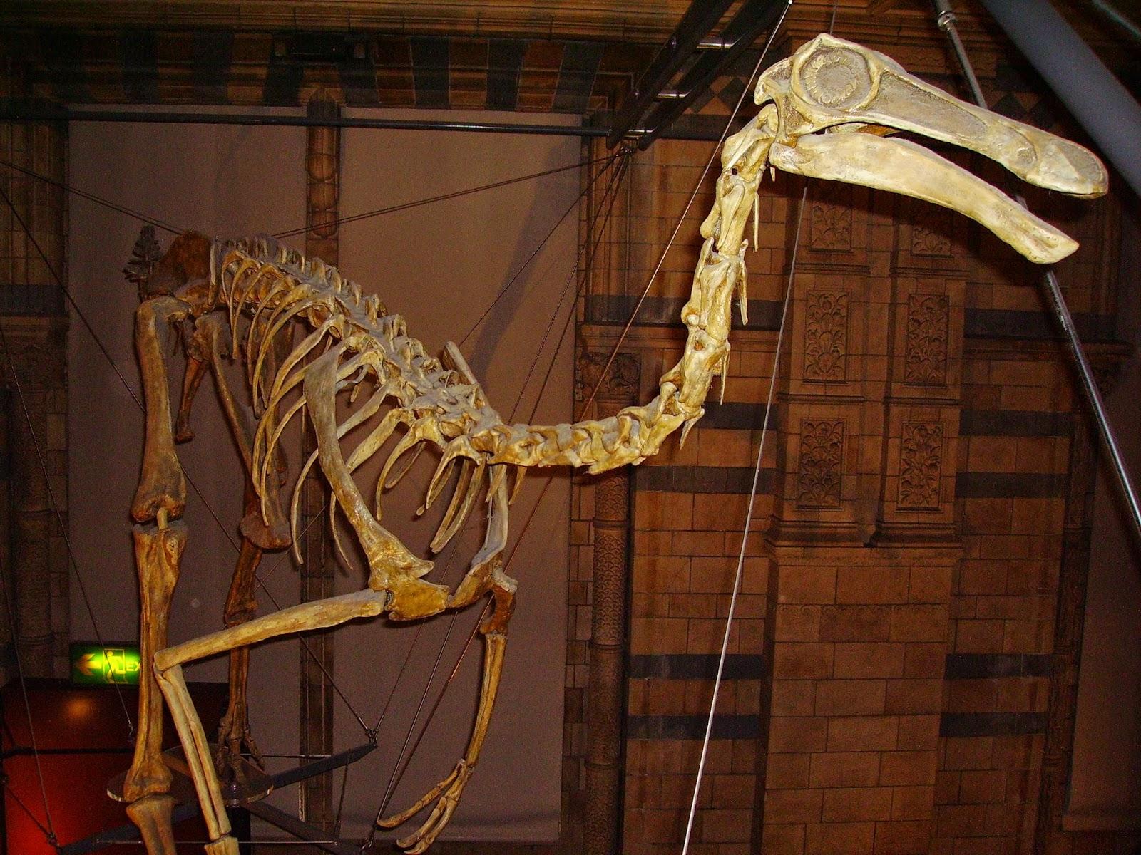 Il Gallimimus visse nel Cretaceo 70 milioni di anni fa