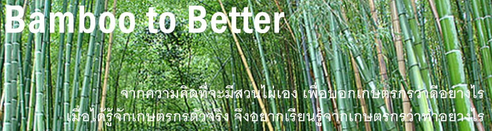 bamboo to better, ปลูกไผ่, ไผ่กิมซุ่ง, ไผ่, สวนไผ่, สหกรณ์ไผ่, ชัยนาท