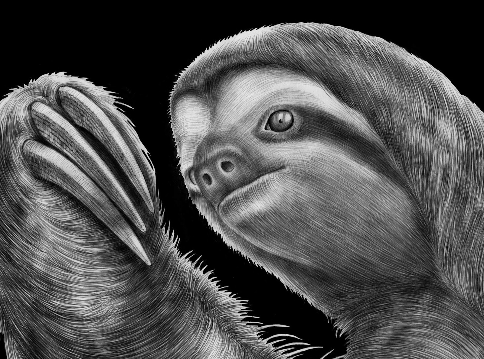 Sloth Drawing Book Blank Drawing Book For   amazoncom