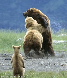 anak beruang dengan keheranan melihat apa yang terjadi dengan ibunya