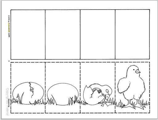 Secuencia De Im  Genes De Huevo A Pollo