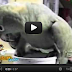 Parrot makes baby sounds - Funny  Video