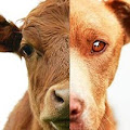 Occupy for Animals - Facebook