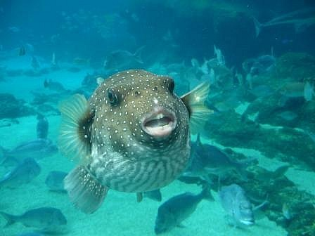 Funny looking fish funny animal for Funny fish pictures