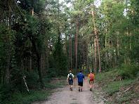 Caminant entre pins per la vall del Torrent del Bosc amb l'amic Victor