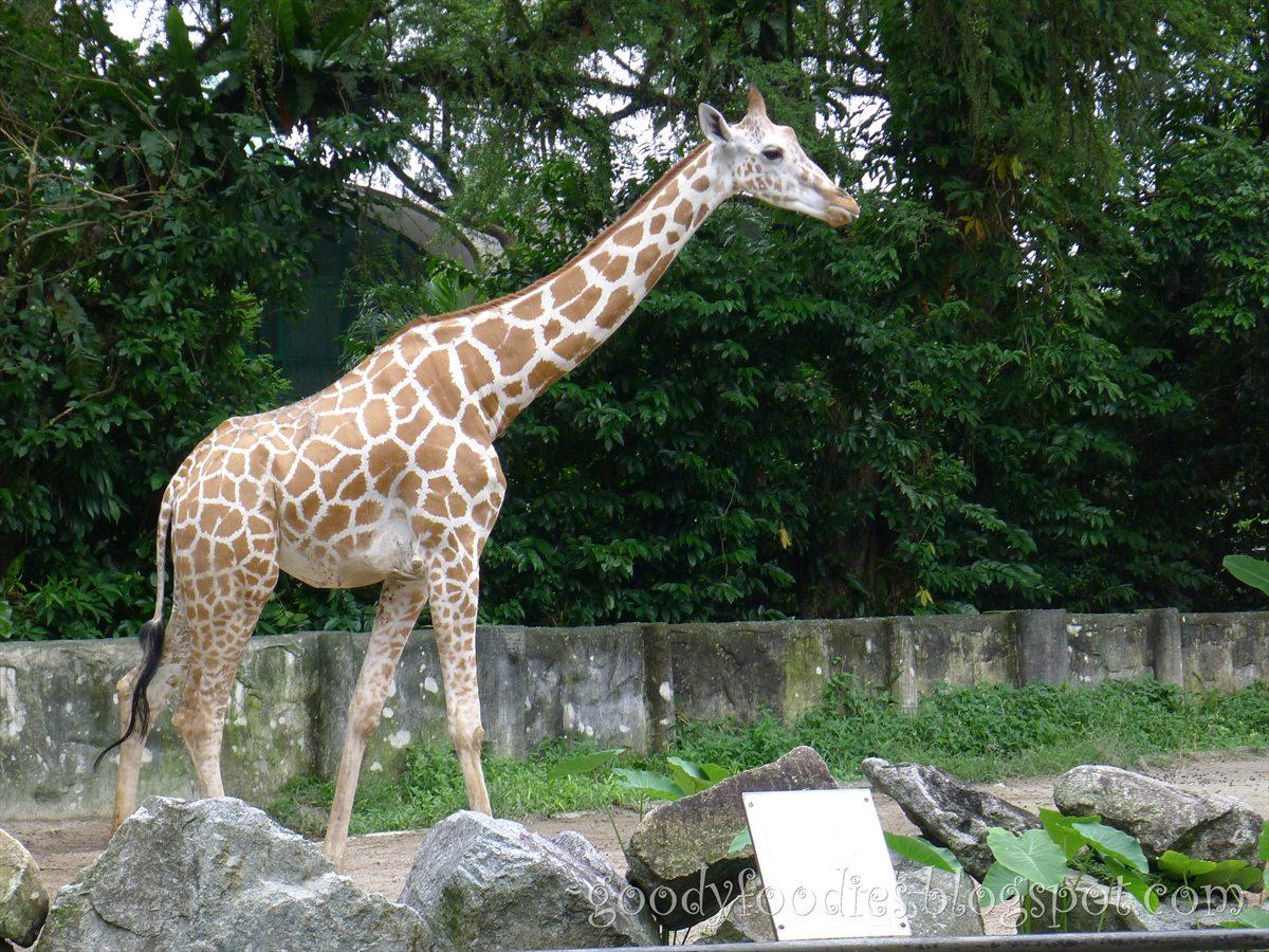 GoodyFoodies: Fun with Kids: Zoo Negara Malaysia