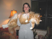 Funny Biggest Maine Coon Cats