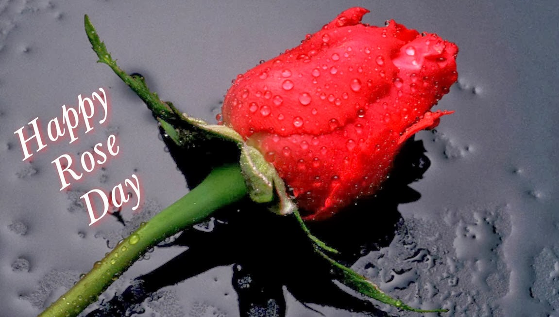 Happy Rose Day 2014 Wallpapers HD