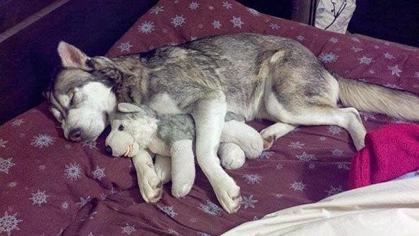 adorable puppies sleeping6