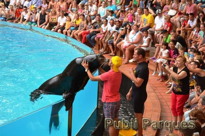 Pedrito durante el Show de leones marinos
