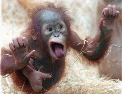 Funny Monkey New Photos 2011 | Funny And Cute Animals