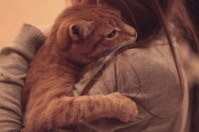 Ох уж эти кошки. Нежная кошечка. Фото кошек.