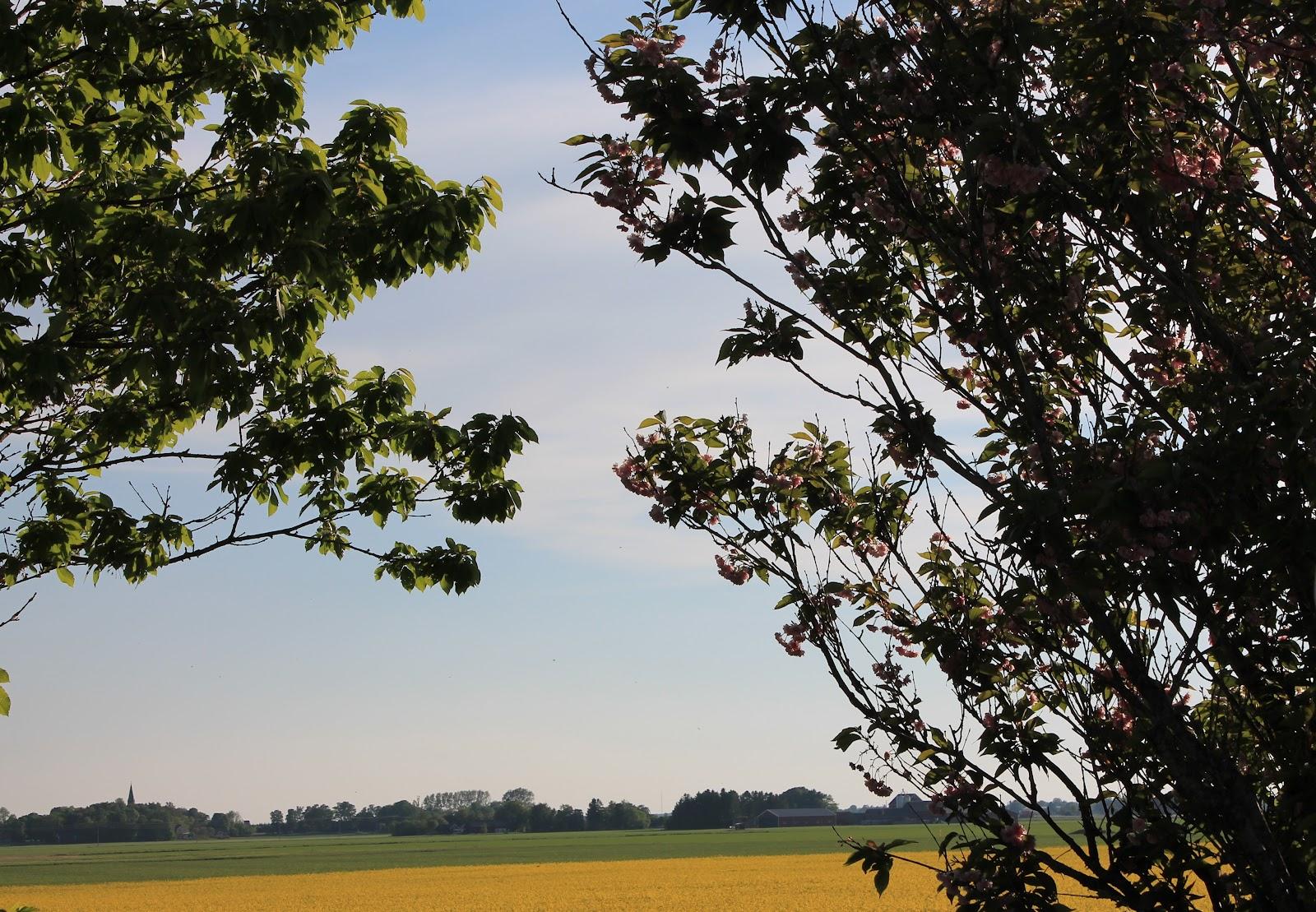 Maija och emma blogg: härlig sommar, sol och värme är här!