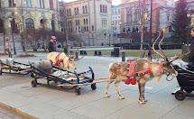 Life Great Oslo City Of Samis