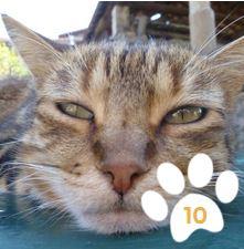 Cliquez sur la photo... et votez pour Totoro.