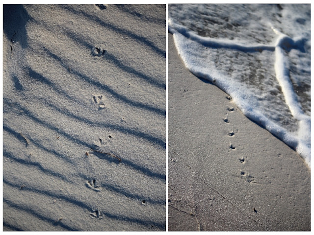 sea gull foot prints in the beach at Pensacola Beach, FL