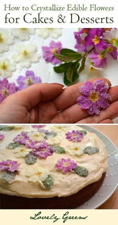 Edible Flowers - Crystallizing Primroses for a Cakes and Desserts #cakedecorating