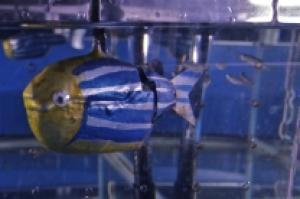 A robotic zebrafish.