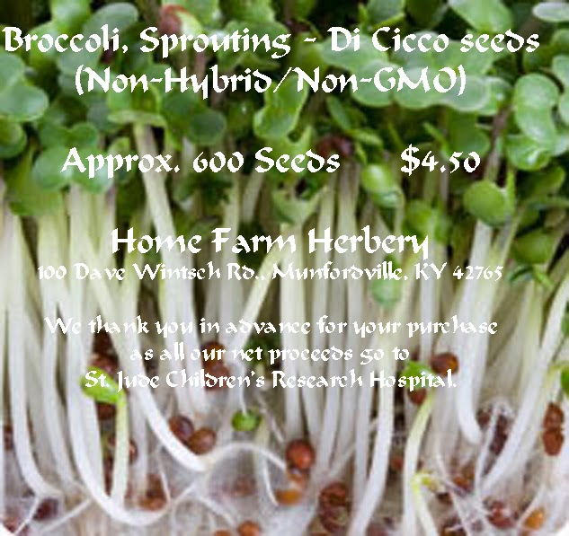 how to grow broccoli sprout seeds