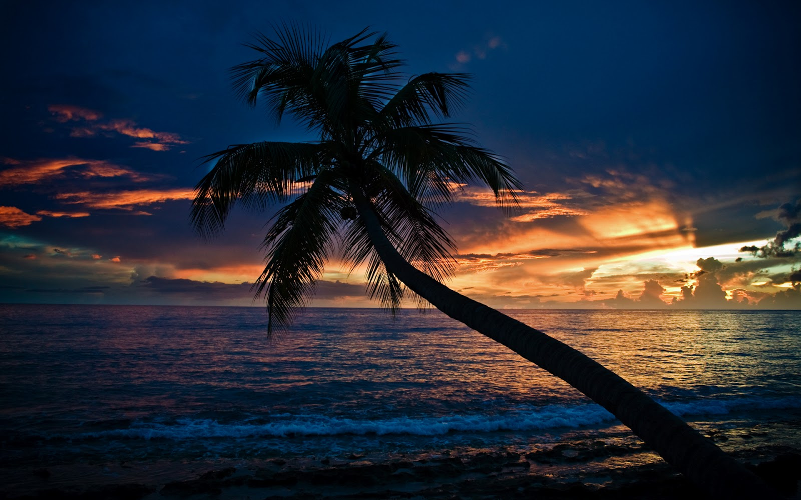 http://4.bp.blogspot.com/-q1I5wqFWUJk/T0KBSXprMNI/AAAAAAAAAzQ/wYrJzvfM_GM/s1600/coconut+tree+in+sea+HD+wallpaper.jpg