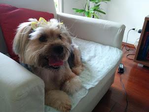 Curso Online: Biscoitos Saudáveis Para Cachorros