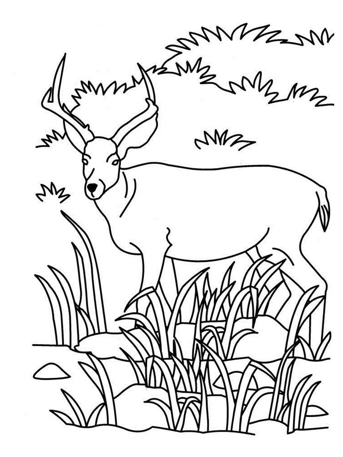 Realistic Forest Animal Coloring Pages on adult coloring pages for anxiety