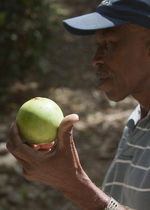 jamaican custard apple - photo #31