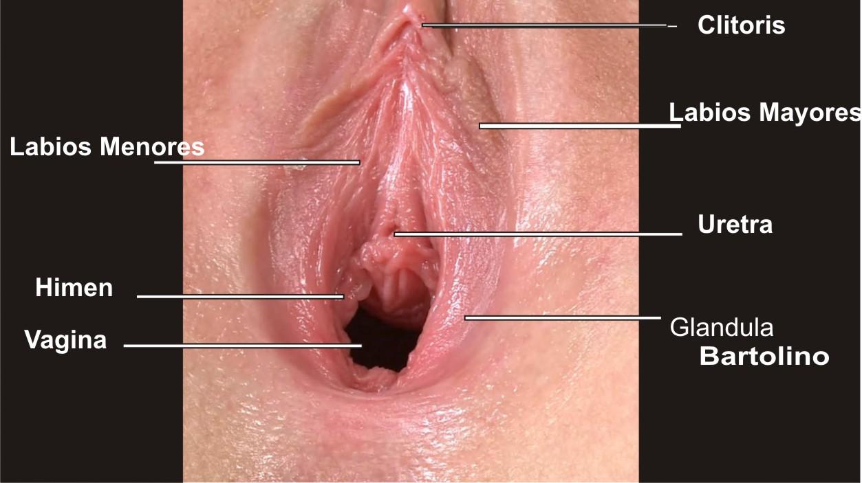 anal solo quiere por el culo por la vajina no  XVIDEOSCOM