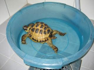 Började morgonen med ett varmt bad