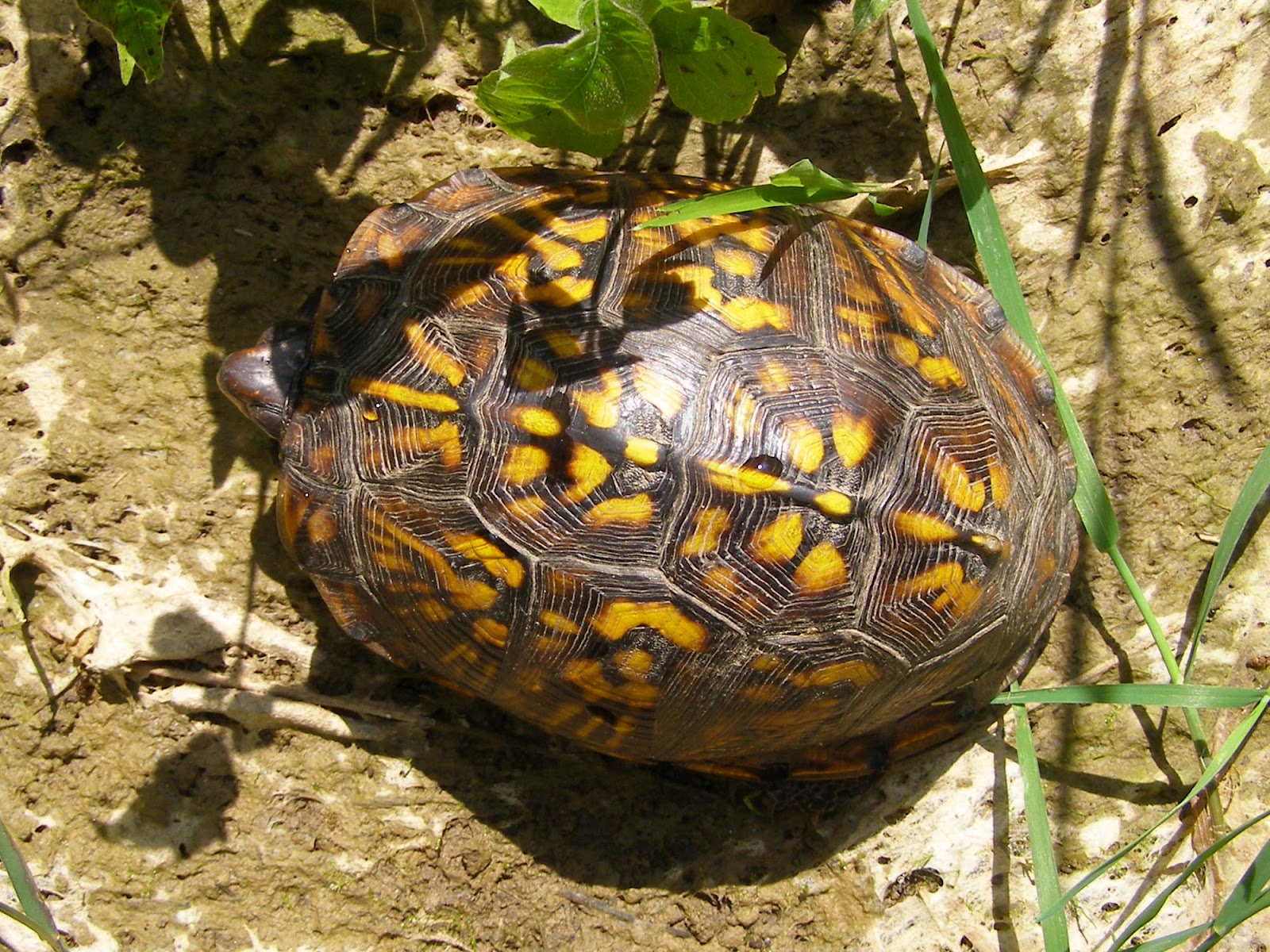 Different Types Of Water Turtles Turtles change their patterns