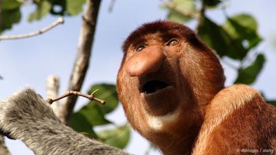 Οκτώ από τα πιο άσχημα ζώα της φύσης που κινδυνεύουν με εξαφάνιση