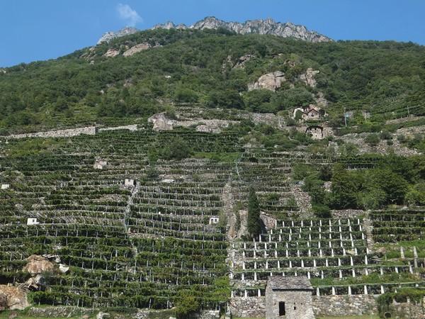 Italie Aoste Aosta vignes