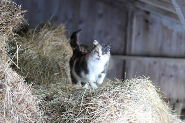 Molly's haymow