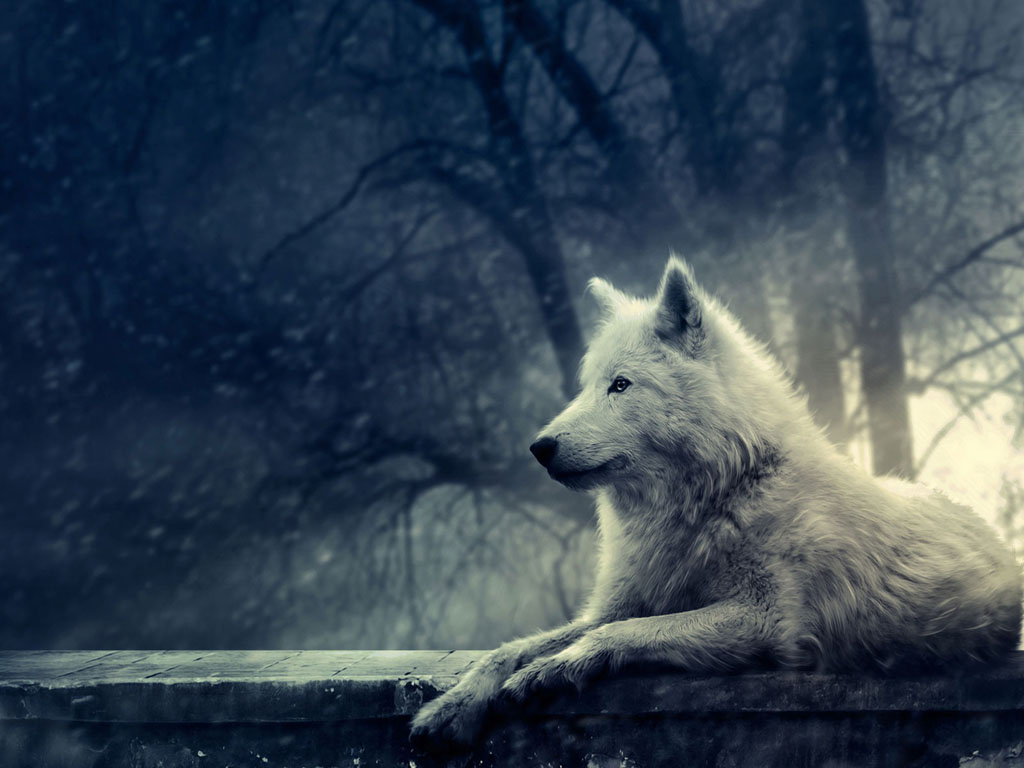 Popular   Wallpaper Horse Wolf - Wolf+in+Winter+Wallpapers+%25282%2529  Collection_307539.jpg