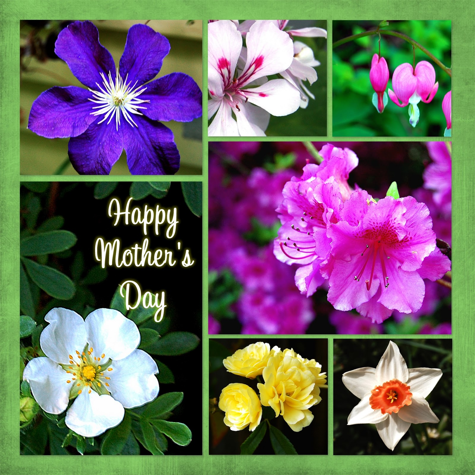 Here Are Some Virtual Flowers For You In Celebration Of Mothers Day I Am Looking Forward To A Nice Spent With Family And