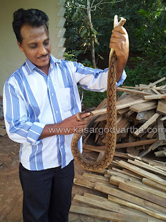 Snake, Forest, Kasaragod, House, Thalangara, Theruvath, Office, Cash, Mulleria, Kerala