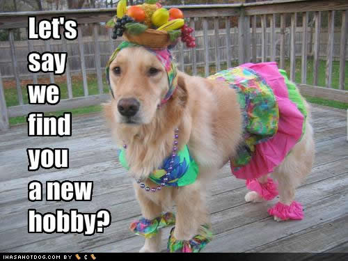 See All The Funny Dog Pictures And Quotes At ThoughtsFurPaws. Weu0027ve Paired  Cute Dog Pictures With Some Funny Quotes! Funny Dogs Calendars In The Known  ...