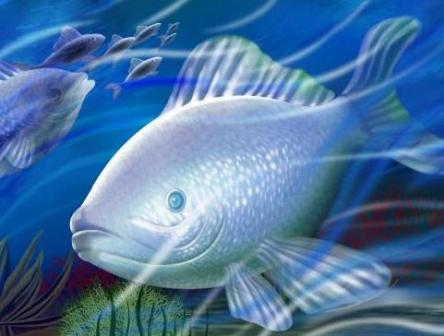beautiful fishes wallpaper. Colorful Fish Wallpapers