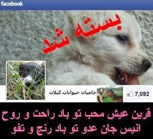 صفحه حامیان حیوانات گیلان بسته شد
