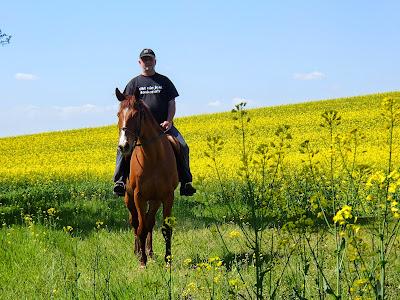 łąka, wiosenne kwiaty, koń, konie, jazda konna
