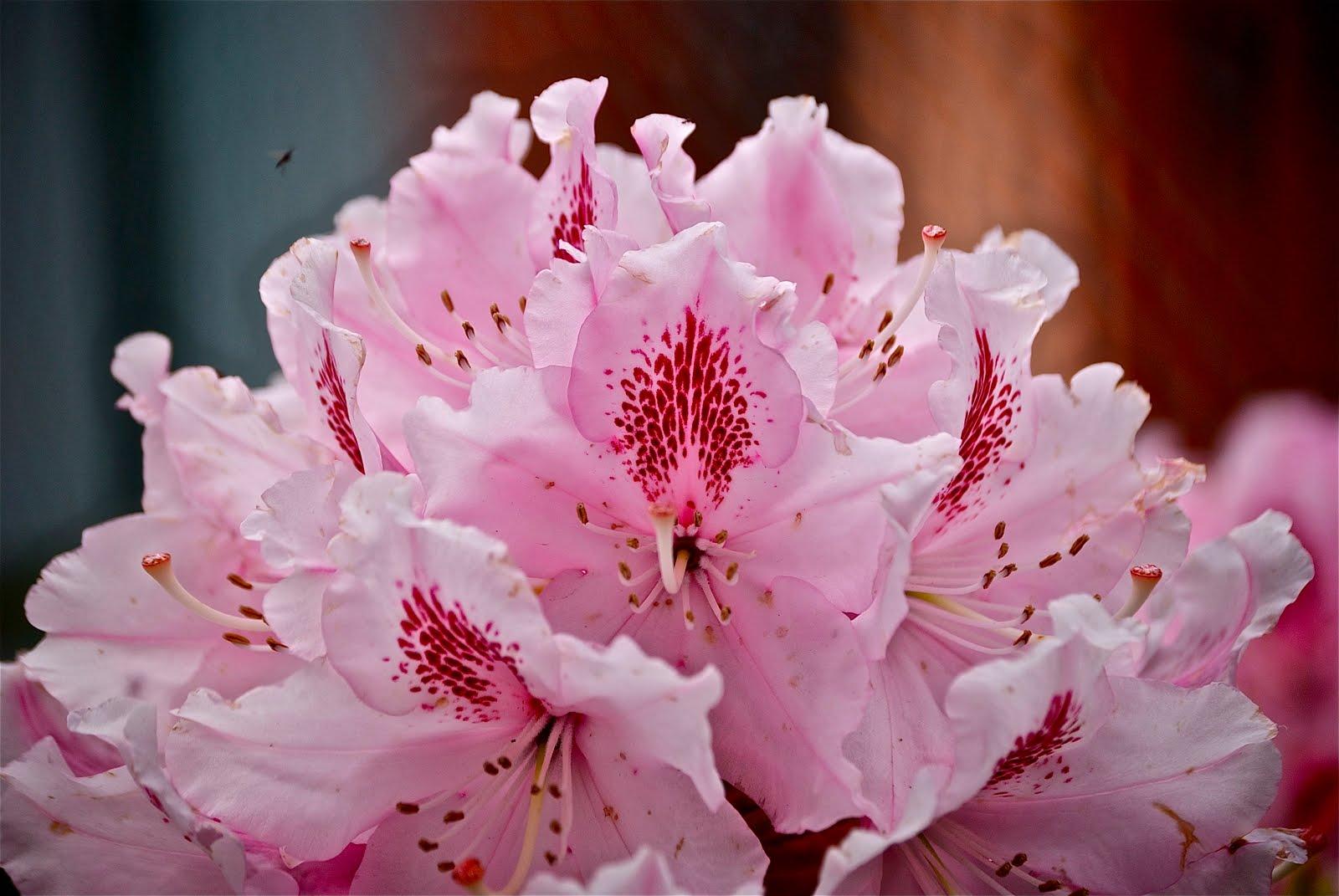 PZ C: fiori di primavera