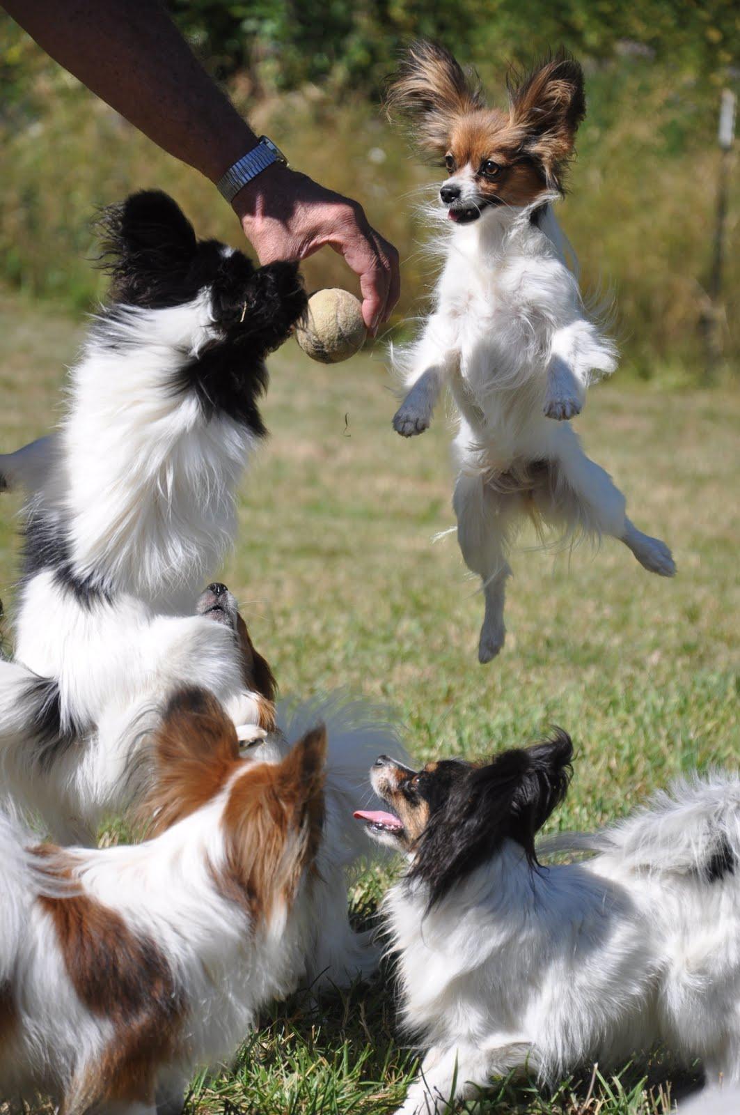 Jump Baby Jump