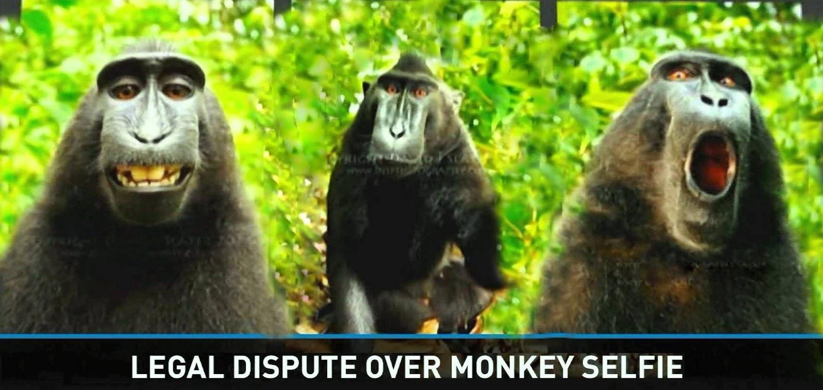 Monkey takes selfie, photographer sues for copyright infringement