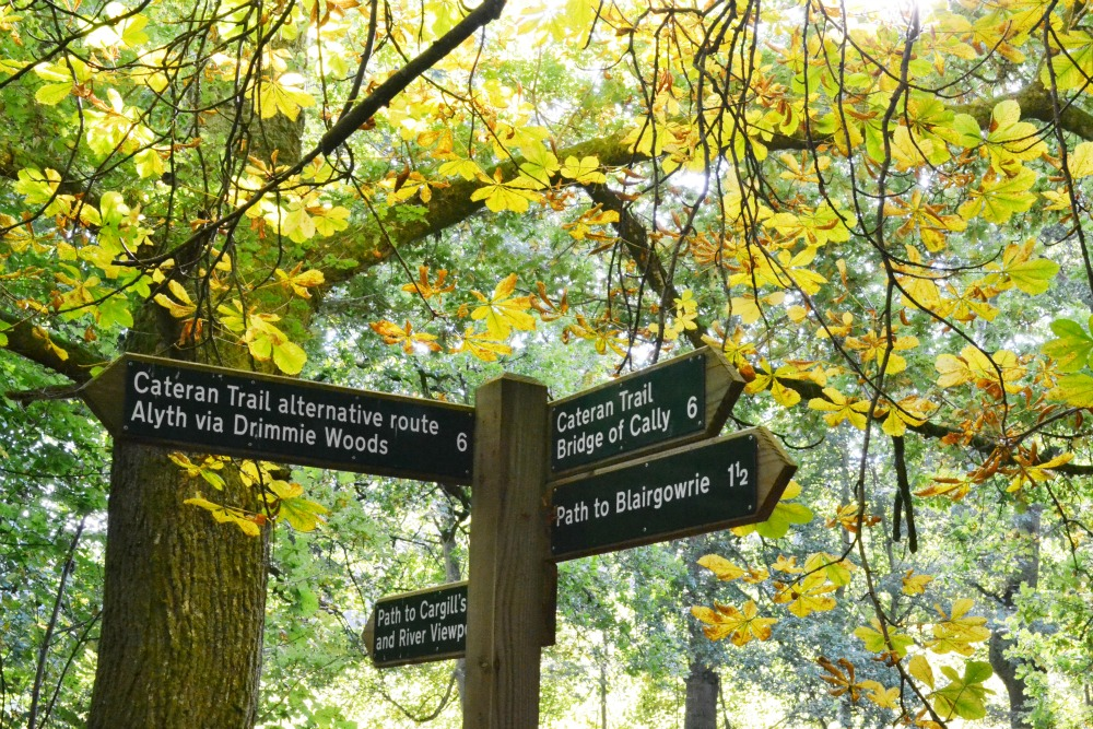 signpost wooden forest blairgowrie