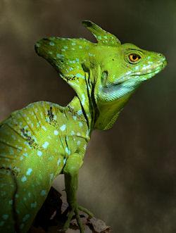 Reptil verde junto al lago by Jim Hoffman | Haz clic para ampliar | Haz clic para ampliar