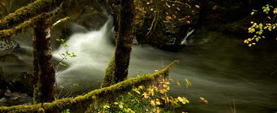 The rushing water of a creek amid lush green foliage and golden leaves.