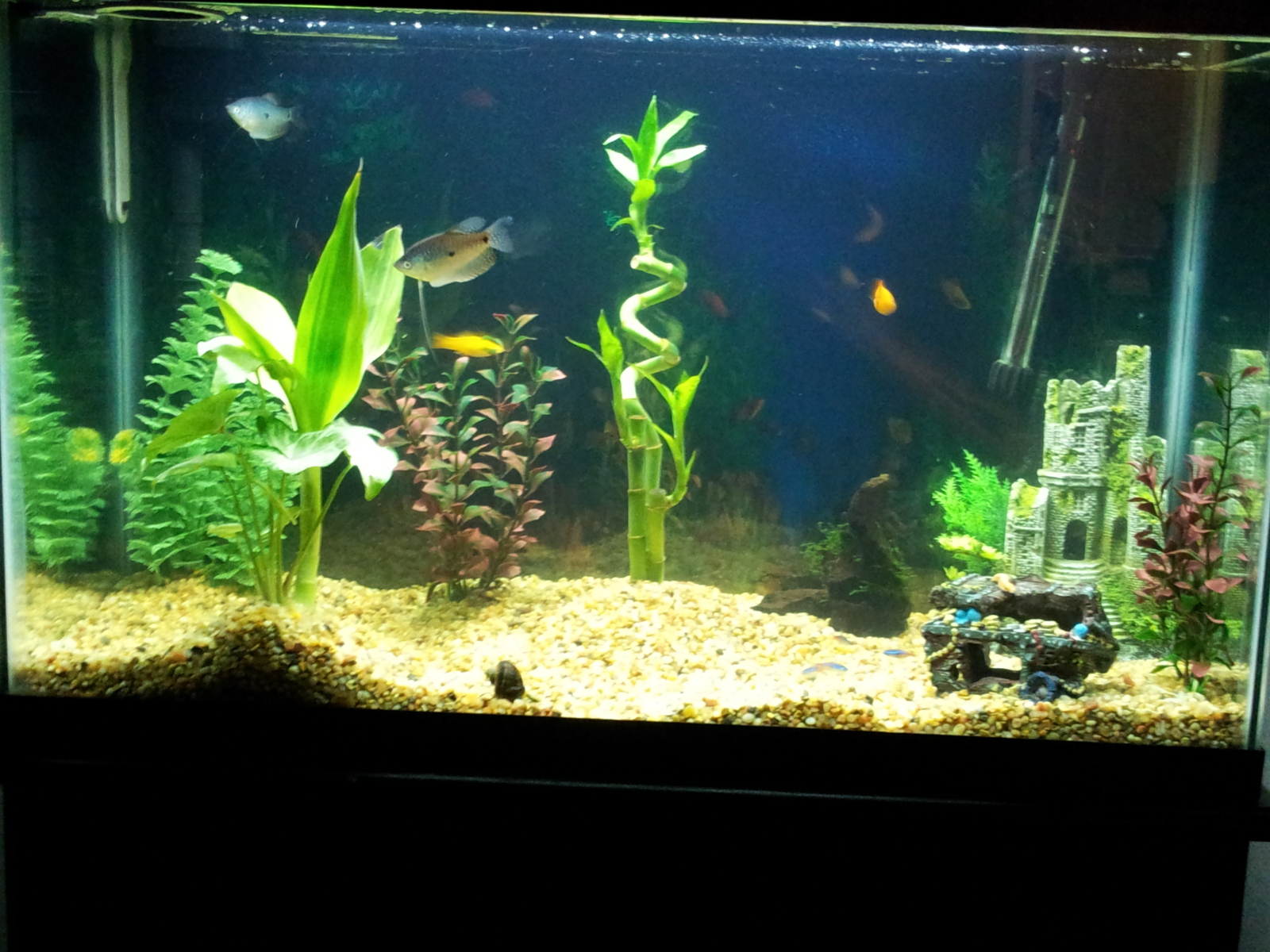 Bamboo Aquarium Bamboo Craft Photo